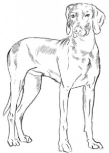 3zeichnung-hund03